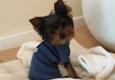 Woof Woof Puppies & Boutique - Southfield, MI