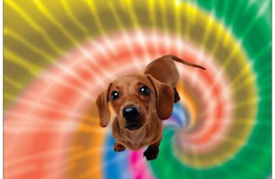 Groovy Dogs Pet Care - Tallahassee, FL