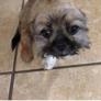 Happy Paws Dog Grooming - El Paso, TX