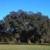 Lagniappe Tree Works