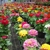Bobo's Nursery & Florist