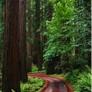 Joe Regan Tree Work Inc. - Hopkinton, MA
