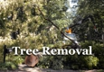 Michael's Tree and Loader Services - Memphis, TN