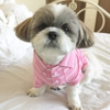 Petite Tail Dog Grooming Salon