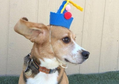 Woofgang's Doggie Daycare - South San Francisco, CA