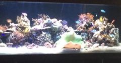 Don Antonio's - Los Angeles, CA. Awesome fish tank