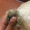 Glendale Veterinary Clinic