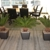 Woburn Office Plants