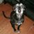 Harper's Haven Dog Rescue - CLOSED
