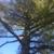 Shamrock Stump Removal & Tree Service Specialist