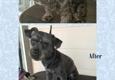 Leon's Pet Grooming - Madera, CA