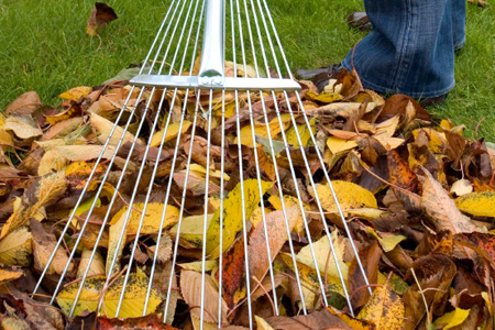 Leaf Raking from TruValue
