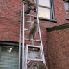 Advanced Wildlife Removal
