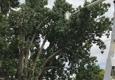 Morning Sun Tree & Landscape Services - Amarillo, TX