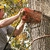 Borgman Tree Service