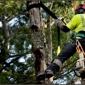 Arbor Tree Care - Thornton, CO