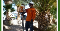 Affordable Tree Service - Las Vegas, NV