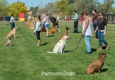 Partners Dog Training School - Cave Creek, AZ