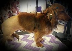 Scissors n Sudzs Pet Salon LLC - Farmington, NM
