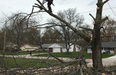 Dannys Tree Service Llc 14219 Triskett