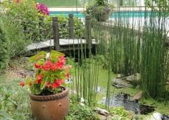 Carter S Nursery Pond Patio Jackson Tn