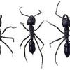 Alliance Pest Management LLC