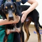 Humane Society Of Huron Valley - Ann Arbor, MI