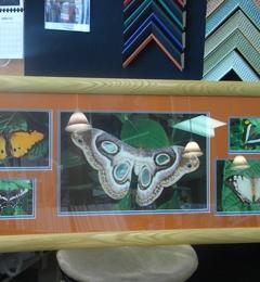 Affordable Creative Framer & Art - Raleigh, NC
