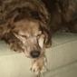 Tri-County Veterinary Service - Sidney, OH. Hannah