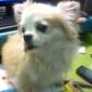 Pawsitive Veterinary Care - Tulsa, OK