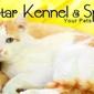 North Star Kennels - Meridian, ID