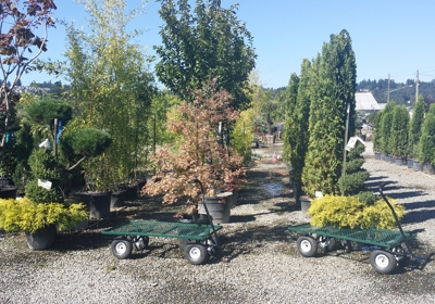 West Valley Nursery Landscape Supply 27701 W Valley Hwy S Kent Wa 98032 Yp Com