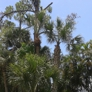 A-1 Tree Specialists - Lantana, FL