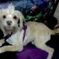 Alpha Dog Pet Spa - Bosque Farms, NM