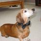 Walking and Wagging Pet Service, LLC - San Antonio, TX