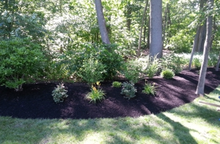 This berm was built to help keep the yard from flooding.  Awesome Job.