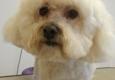 Adorable Dog Grooming - Hillsboro, MO