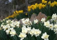 Villager Nursery & Landscape - Truckee, CA. Villager is always beautifying Truckee