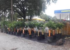 Citrus Park Landscape Nursery Tampa Fl