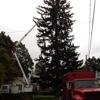 Corona Tree Services & Landscaping LLC