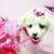 Puppy Heaven