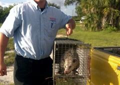 Pestgo Exterminator Inc - Tampa, FL