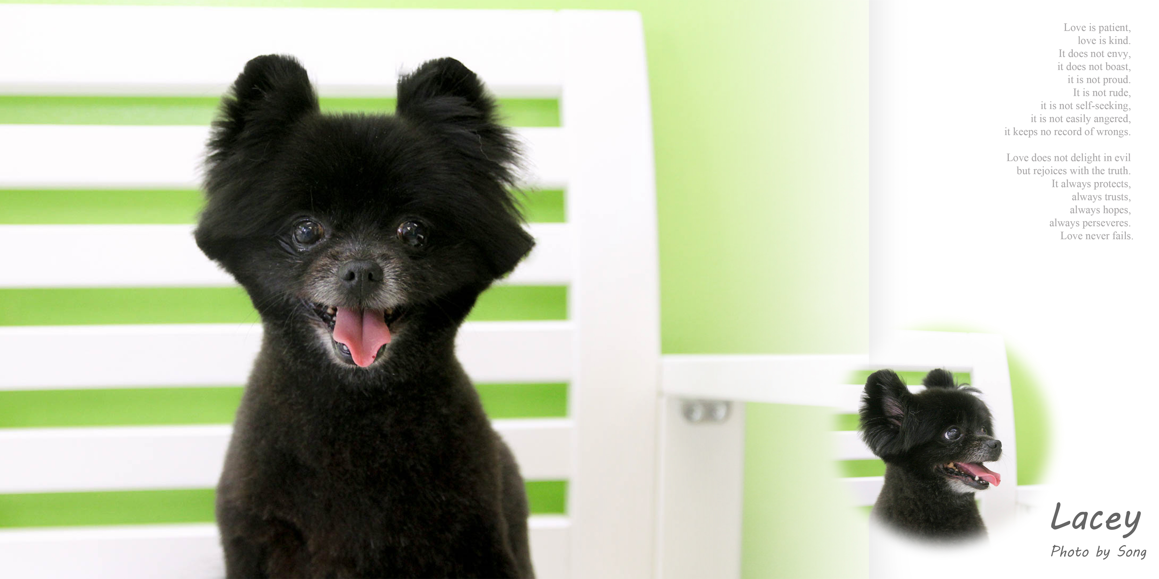 Songs pet grooming 573 w vista way vista ca 92083 yp solutioingenieria Images