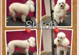 Paws & Kisses Pet Salon, LLC - Rock Hill, SC