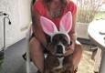 Humane Society of Greater Miami Adopt-A-Pet - North Miami Beach, FL. Roxy