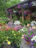 Always a large assortment of Spring flowers.