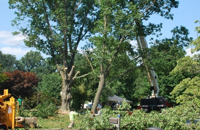 Berra Tree Experts - Burtonsville, MD. 3rd and last