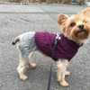 Swifto Dog Walking