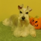 Pampered Pet Grooming and Boarding - Champaign, IL