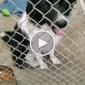 Lake County Humane Society - Mentor, OH